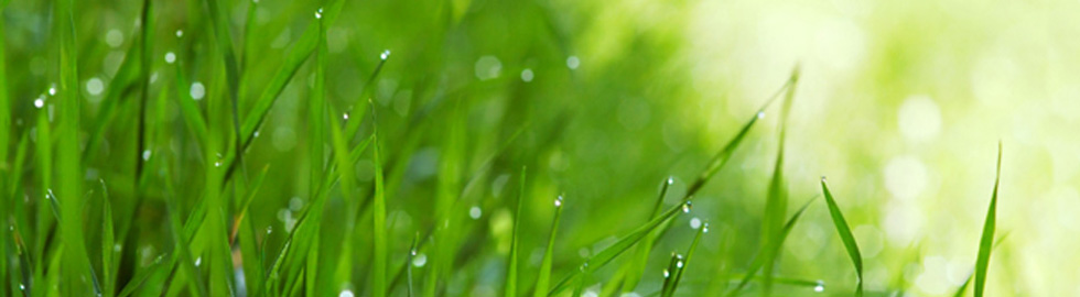 Complete Landscaping & Lawn Maintenance